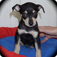 Adopt A Pet :: Skeeter - La Habra Heights, CA