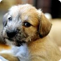 Adopt A Pet :: Dori - Minneapolis, MN