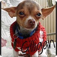 Adopt A Pet :: Gilligan - Orange, CA