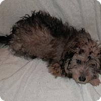Adopt A Pet :: Lionel - Clarksville, TN