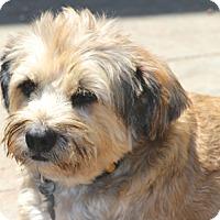 Adopt A Pet :: Heathrow - Norwalk, CT