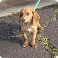 Adopt A Pet :: Andy - Dumfries, VA
