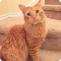 Adopt A Pet :: Frack - Arlington/Ft Worth, TX
