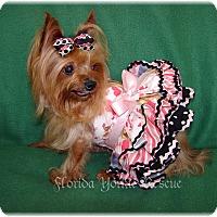 Adopt A Pet :: Nadine - Palm City, FL