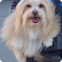 Adopt A Pet :: Stella - Van Nuys, CA