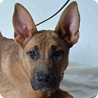 Adopt A Pet :: MILES - Ukiah, CA