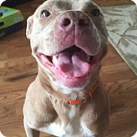 Adopt A Pet :: Yoshi - Picayune, MS