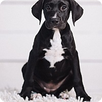 Adopt A Pet :: Tami - Portland, OR