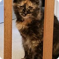 Adopt A Pet :: Kestrel (& Callum) - Herndon, VA