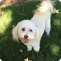 Adopt A Pet :: Murray Williams - Fresno, CA