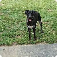 Adopt A Pet :: Nahla - Phoenxville, PA