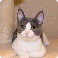 Adopt A Pet :: Sawyer - Seville, OH