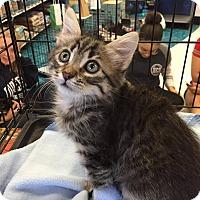 Adopt A Pet :: Kirk - Mansfield, TX