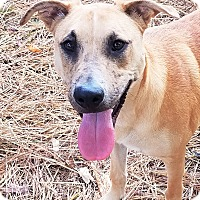 Adopt A Pet :: Rainer - Murphysboro, IL