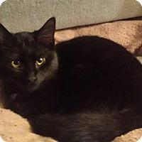 Adopt A Pet :: Toones - Chelsea - Kalamazoo, MI