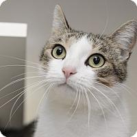 Adopt A Pet :: Elfie - Whitehall, PA