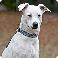 Adopt A Pet :: Maylie - Cashiers, NC