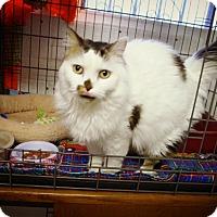 Adopt A Pet :: Chloe - Casa Grande, AZ