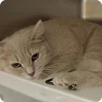 Adopt A Pet :: Seraphina 33826309 - Westampton, NJ