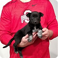 Adopt A Pet :: Remi - South Euclid, OH