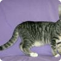 Adopt A Pet :: Angelo - Powell, OH