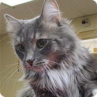 Adopt A Pet :: Smokey - Euclid, OH