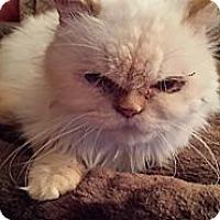 Adopt A Pet :: Petunia - Columbus, OH