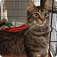 Adopt A Pet :: Dilworth - Byron Center, MI