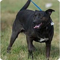 Adopt A Pet :: Pogo - Providence, RI