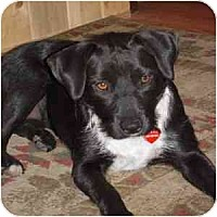 Adopt A Pet :: Mindi - Phoenix, AZ