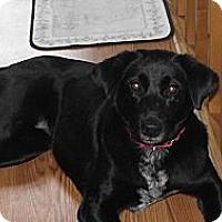 Adopt A Pet :: Demi - Rome, NY