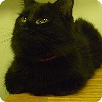 Adopt A Pet :: Azalea - Hamburg, NY