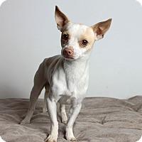 Adopt A Pet :: Maurice - Oakland, CA
