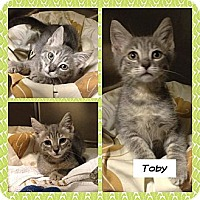 Adopt A Pet :: Toby - Miami, FL
