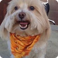 Adopt A Pet :: Nela - Van Nuys, CA