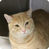 Adopt A Pet :: Saz Saz - El Cajon, CA