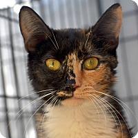 Adopt A Pet :: Little Buffy - Brooklyn, NY