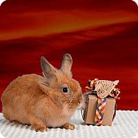 Adopt A Pet :: Anya - Marietta, GA