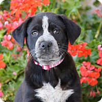 Adopt A Pet :: Anne von Maysie - Thousand Oaks, CA