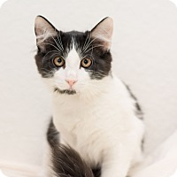 Adopt A Pet :: Mimi - Fountain Hills, AZ