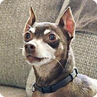Miniature Pinscher Mix Dog for adoption in Lisbon, Iowa - Jackson