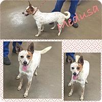Adopt A Pet :: Medusa - Steger, IL