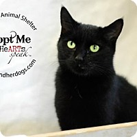 Adopt A Pet :: Gypsy - Keswick, ON