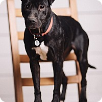 Adopt A Pet :: Licorice - Portland, OR