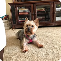 Adopt A Pet :: Romeo - Long Beach, NY
