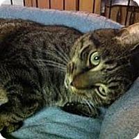 Adopt A Pet :: Simon - River Edge, NJ