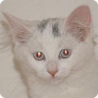 Adopt A Pet :: Glitter - Scottsdale, AZ