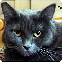 Adopt A Pet :: Paloma - Portland, OR