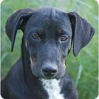 Adopt A Pet :: Handsome Dan - Providence, RI