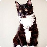 Adopt A Pet :: Cleo Adopted - Nine Mile Falls, WA